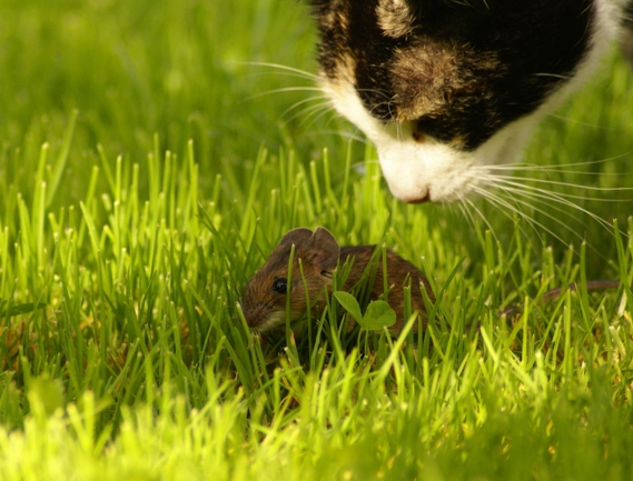 Katz-und-Maus.jpg