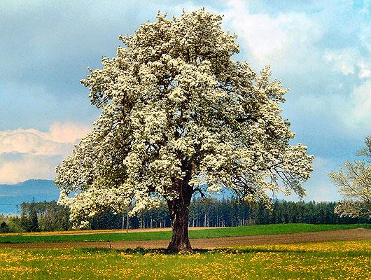 Appel-Baum.jpg